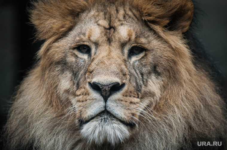 гибель львов петиция президент закрыть крымский парк Тайган зоозащитники условия содержания животные
