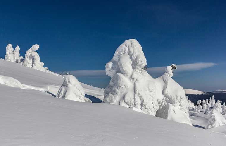 из-под снега спасли